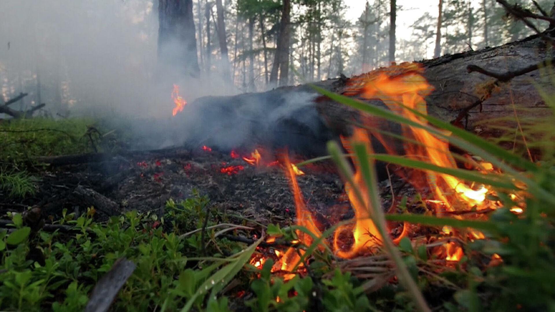 Локализацию и ликвидацию лесных пожаров в Якутии проведут взрывными работами