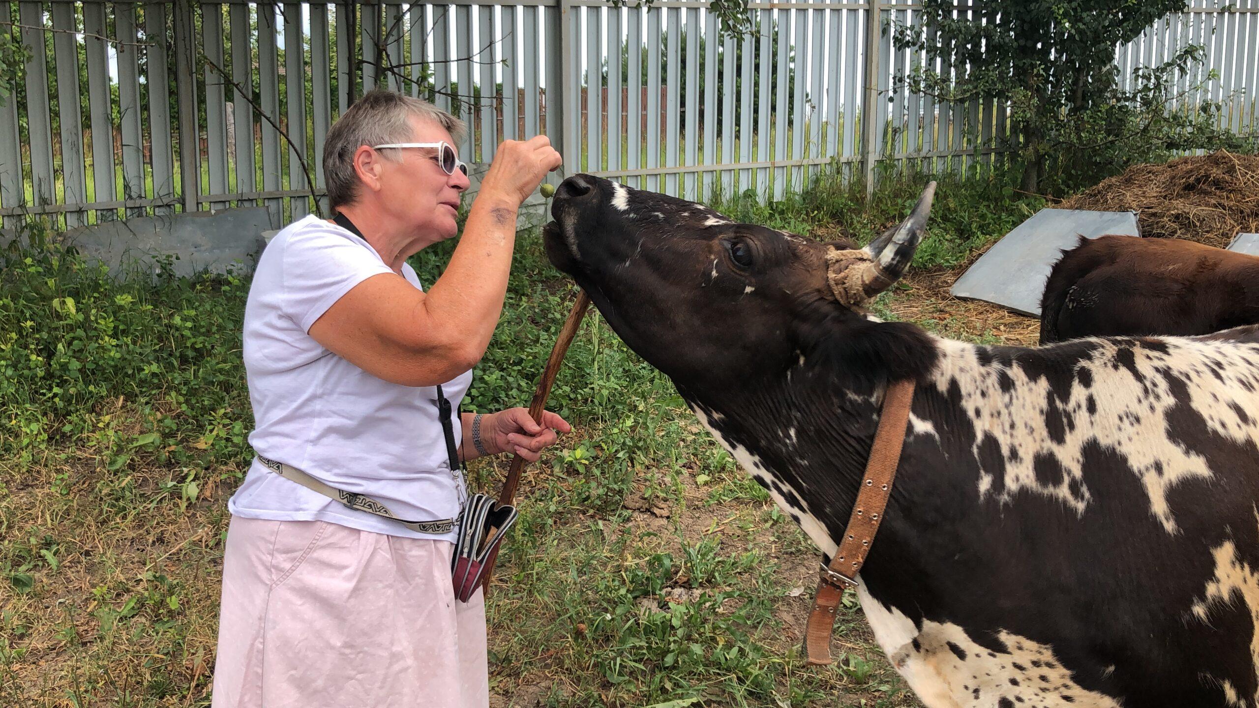 Жительница Московской области разводит коров якутской породы