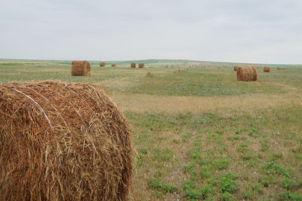 Более 27 500 га сенокосных угодий скосили в Якутии