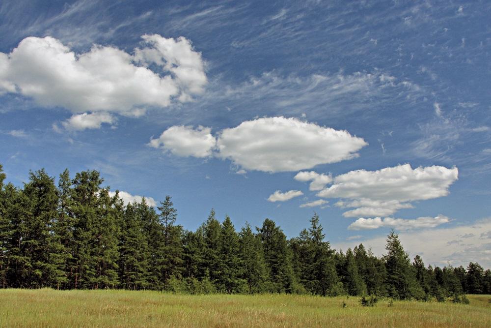 Запрет на вывоз необработанных лесоматериалов введут в России с 2022 года