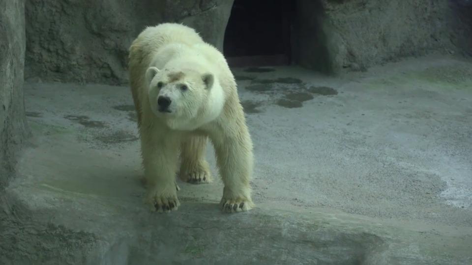Московский зоопарк запустит конкурс по выбору имени медведицы, найденной в Якутии