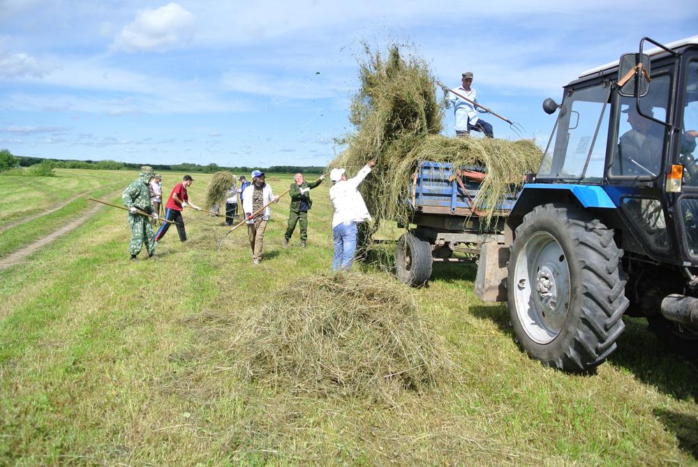 Сельхозпредприятиям рекомендовали заготовить недостающий объем сена в пределах Якутии