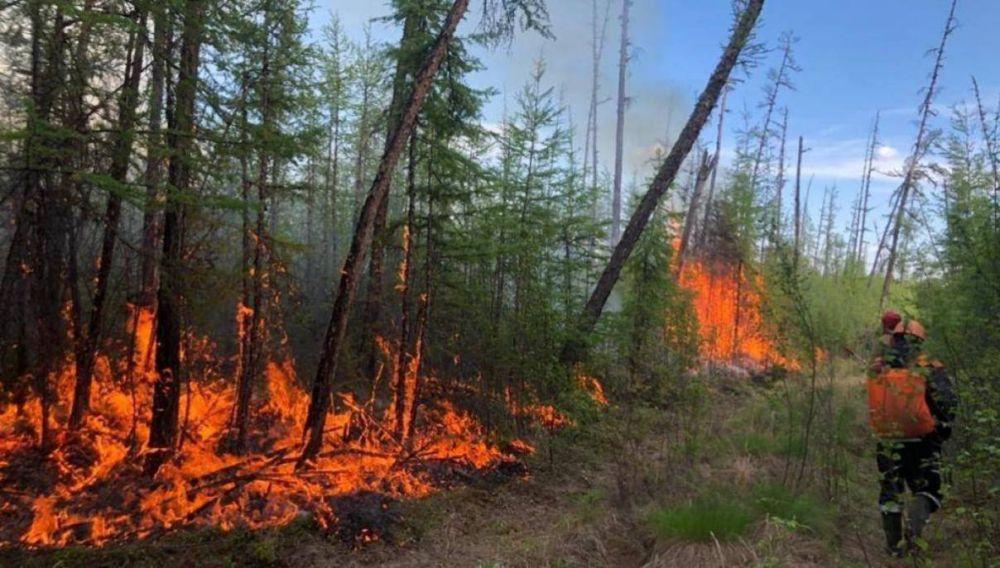 Владимир Путин поручил помочь пострадавшим от пожаров регионам
