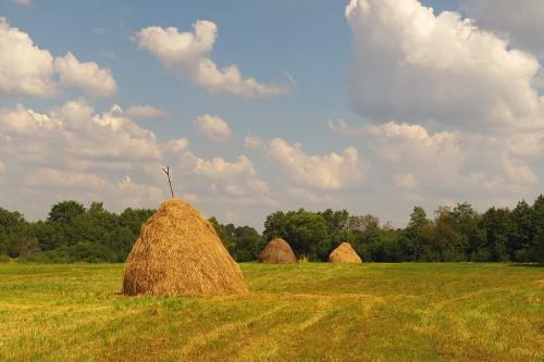 Томпонский район Якутии планирует закупить 1000 тонн сена из Амурской области