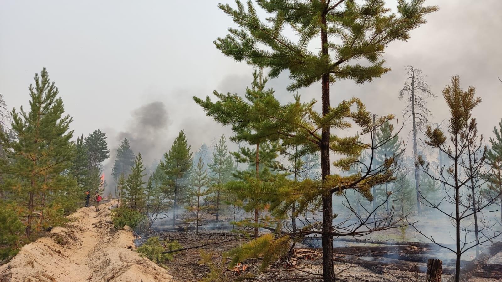 Вячеслав Олесов: Лесной кодекс Российской Федерации нуждается в изменениях