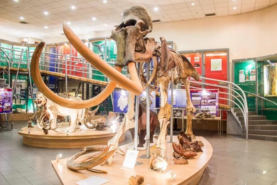 Выставка с экспонатами Музея мамонта СВФУ пройдет в Китае