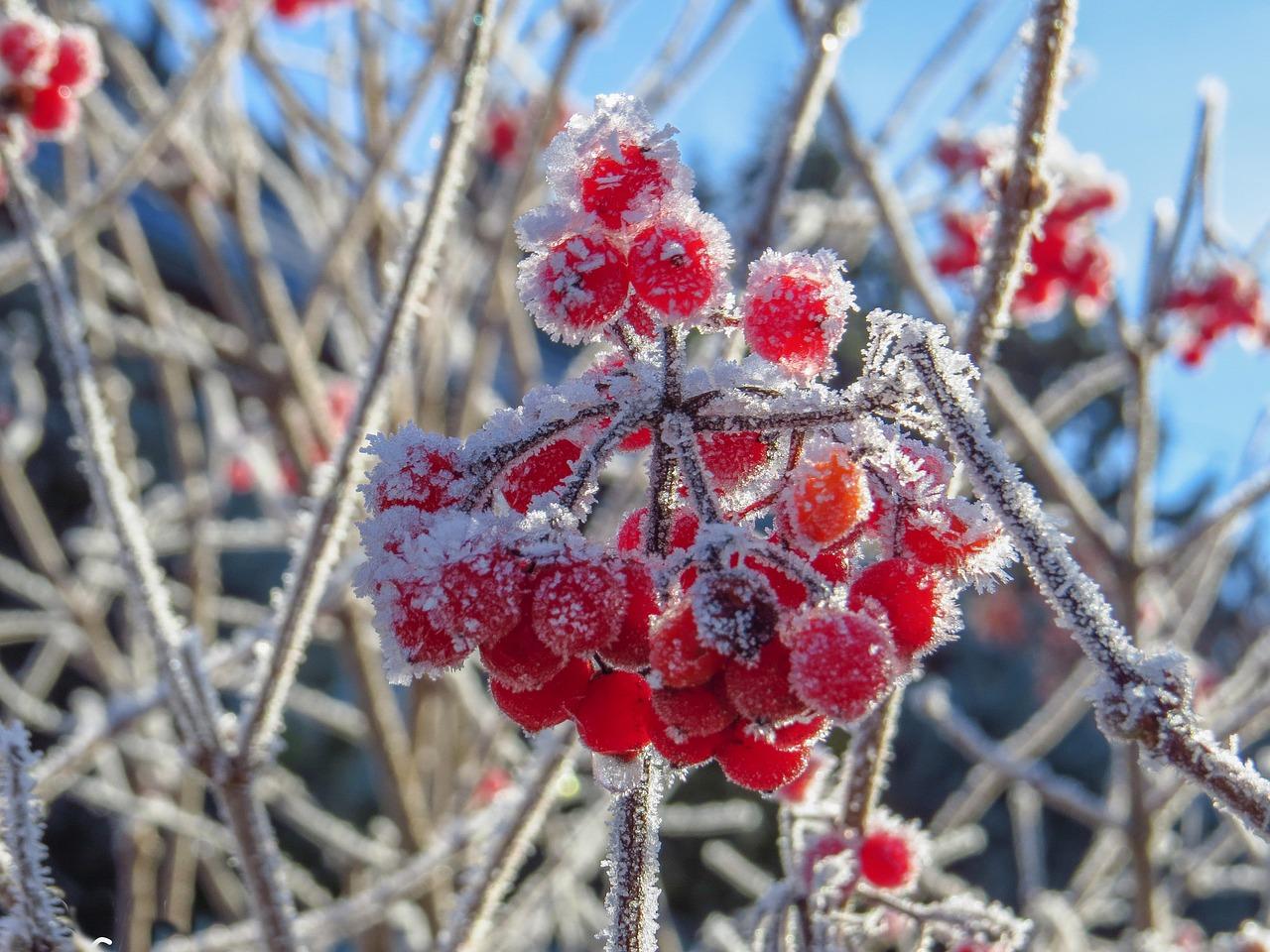 Заморозки ожидаются в районах Якутии в ночь на 31 августа