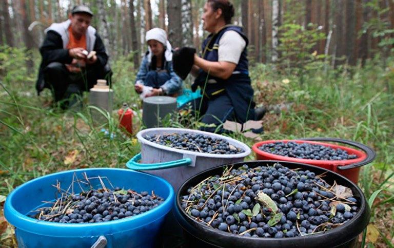 Жителям Якутии рекомендовали воздержатся от выезда в лес