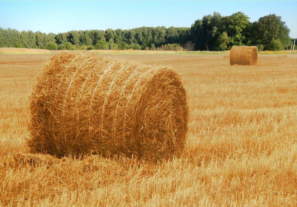Более 360 тыс тонн сена планируют заготовить в Якутии в 2021 году