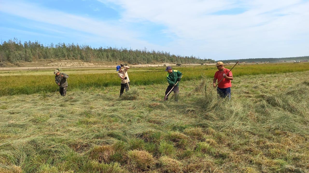 Мобильные бригады заготовят 39 тыс тонн сена на отдаленных участках в Якутии