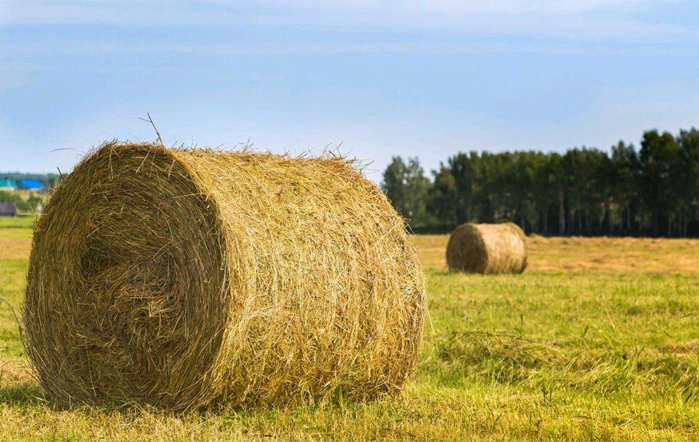 Свыше 294 тыс тонн сена заготовили в Якутии
