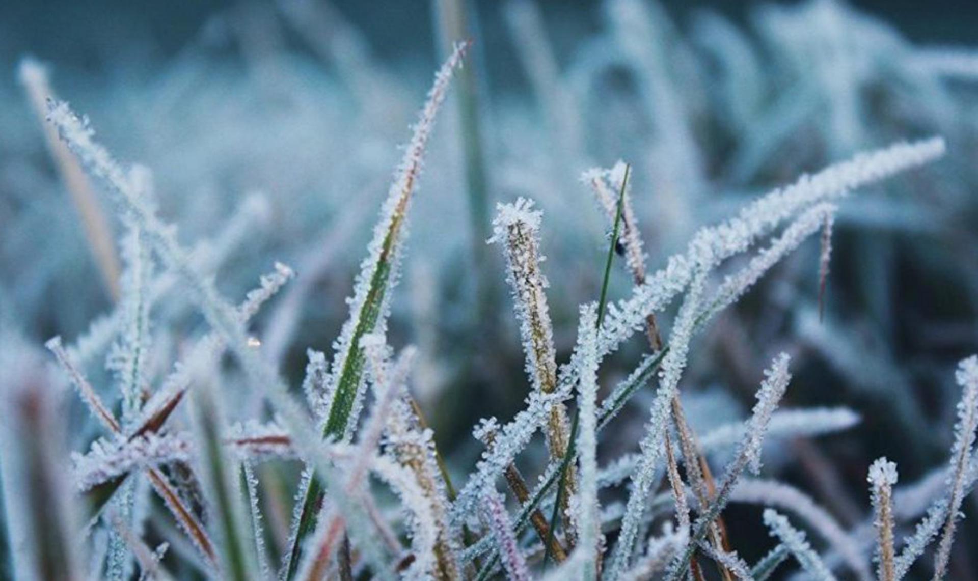 Заморозки прогнозируют в ряде районов Якутии 29 августа