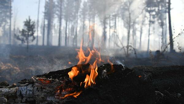 Власти РФ окажут помощь пострадавшим от лесных пожаров якутянам