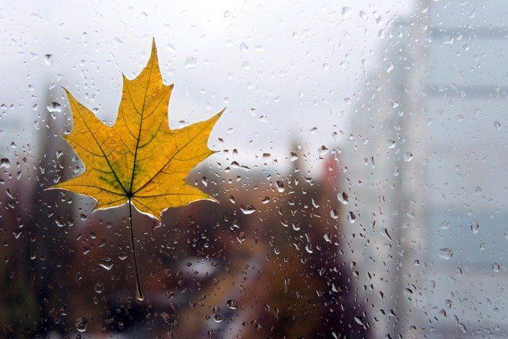 Дожди прогнозируют на большей части Якутии в ближайшие дни