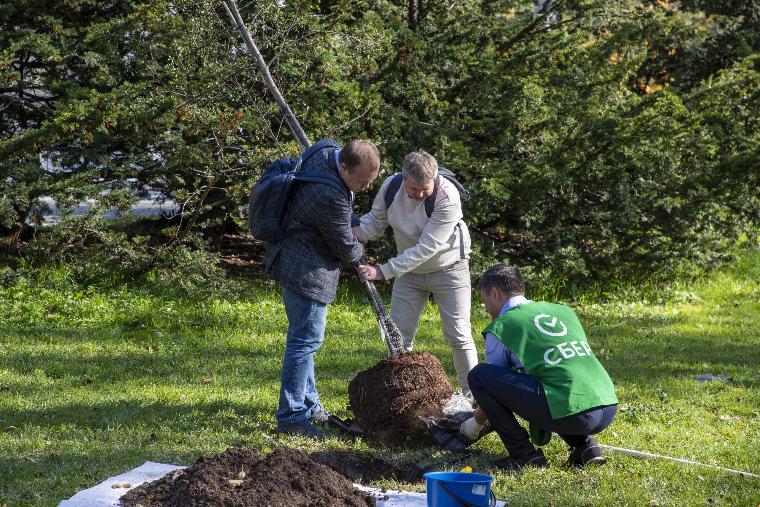 Ученики медиашколы «Дальневосточный репортер» посадили деревья на Сахалине