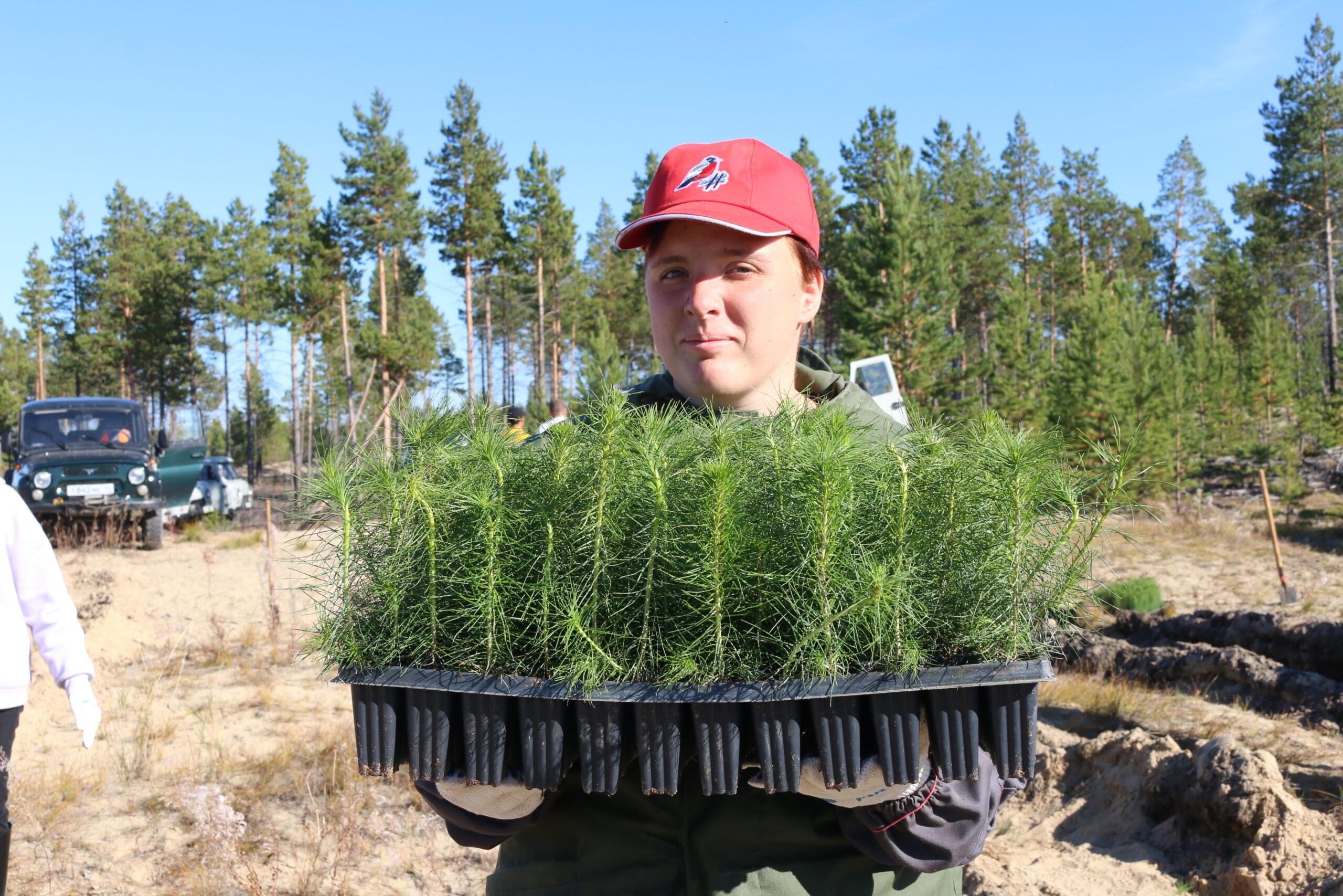 Две тысячи саженцев сосны посадили в Якутске в рамках акции «Сохраним лес»