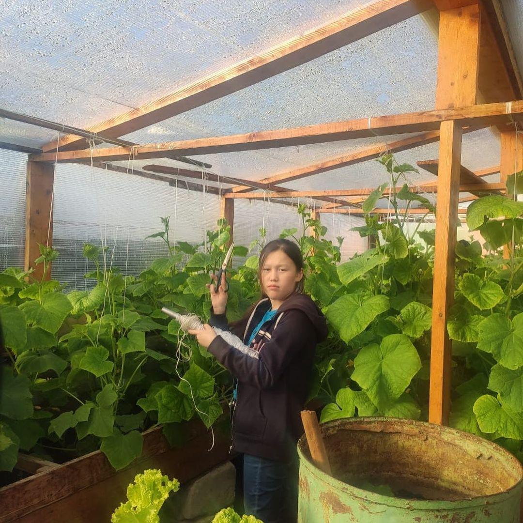 Школьники вырастили 85 кг овощей в Анабарском районе Якутии