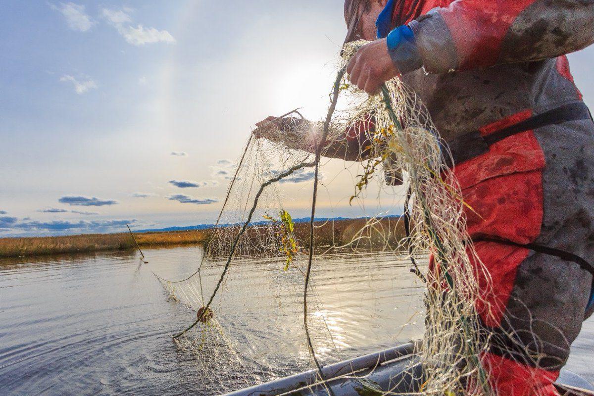 Месячник по охране нерестующих видов рыб стартует в районах Якутии 20 сентября