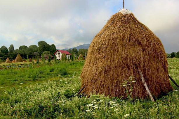 Более 70% от плана сенозаготовки на 2021 год выполнили в Якутии
