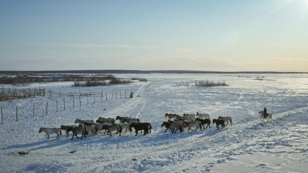 АЛРОСА стала официальным партнером Плейстоценового парка в Якутии