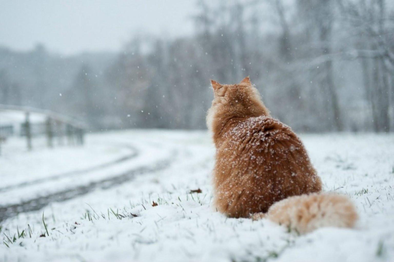 Снегопад прогнозируют по всей Якутии в выходные